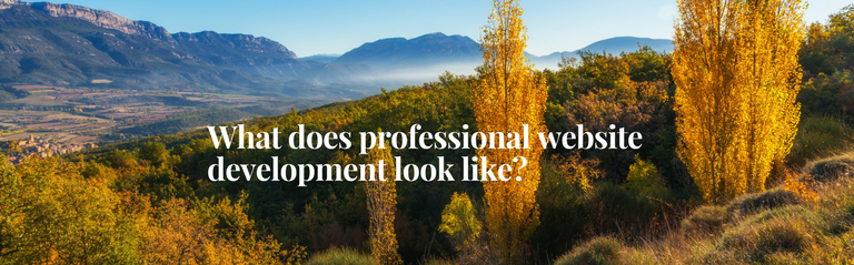 What does professional website development look like?